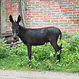 Wet donkey